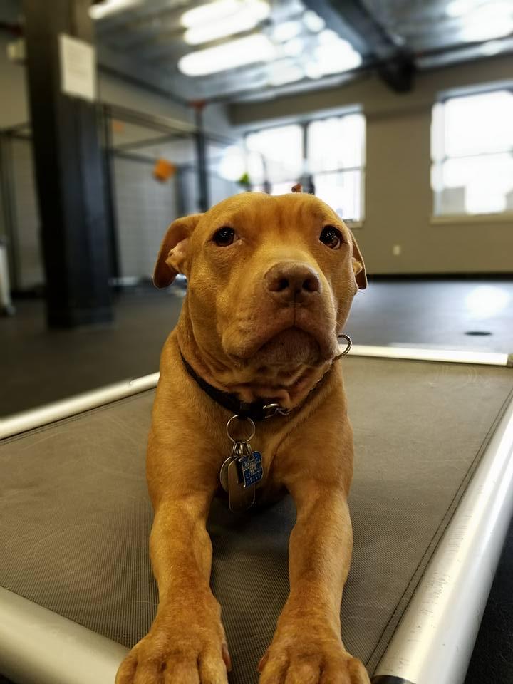 dog training boston urban hound