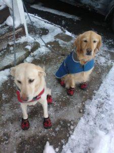 hiking dog daycare boston urban hound