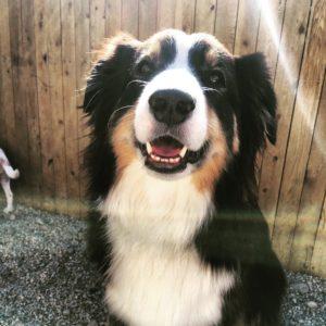 dog daycare boston urban hound