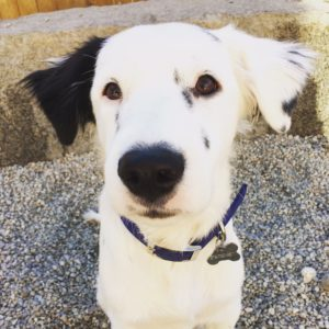 boston dog daycare urban hound