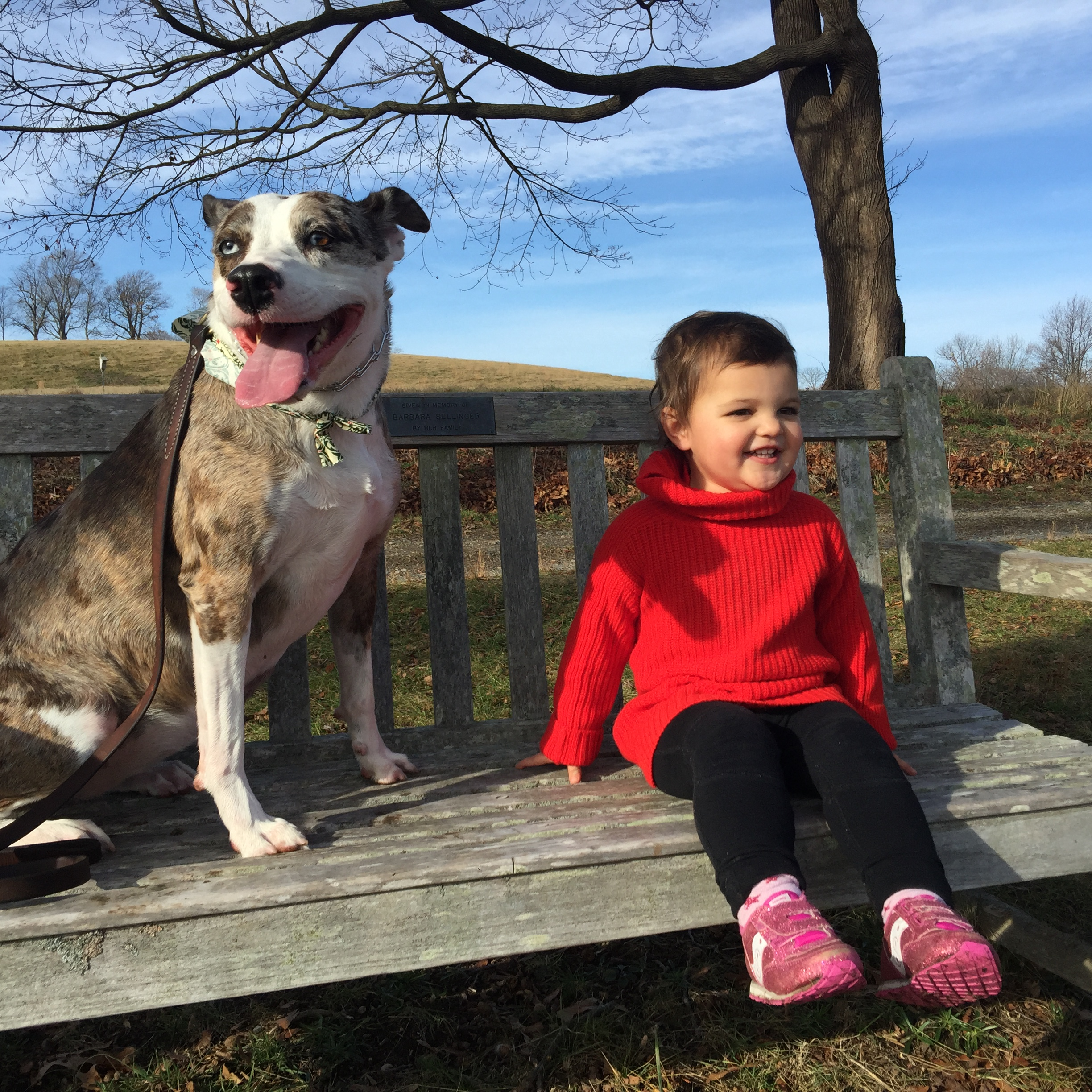 dog training, urban hound, boston, dog daycare