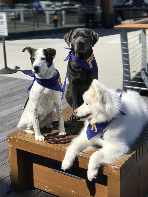 dog walking boston seaport urban hound training