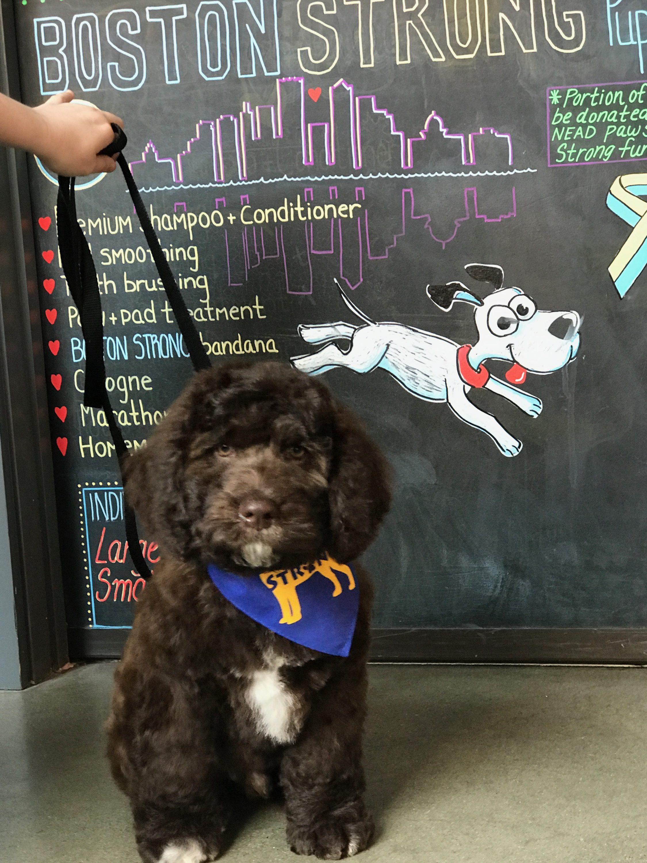 urban hound dog grooming boston