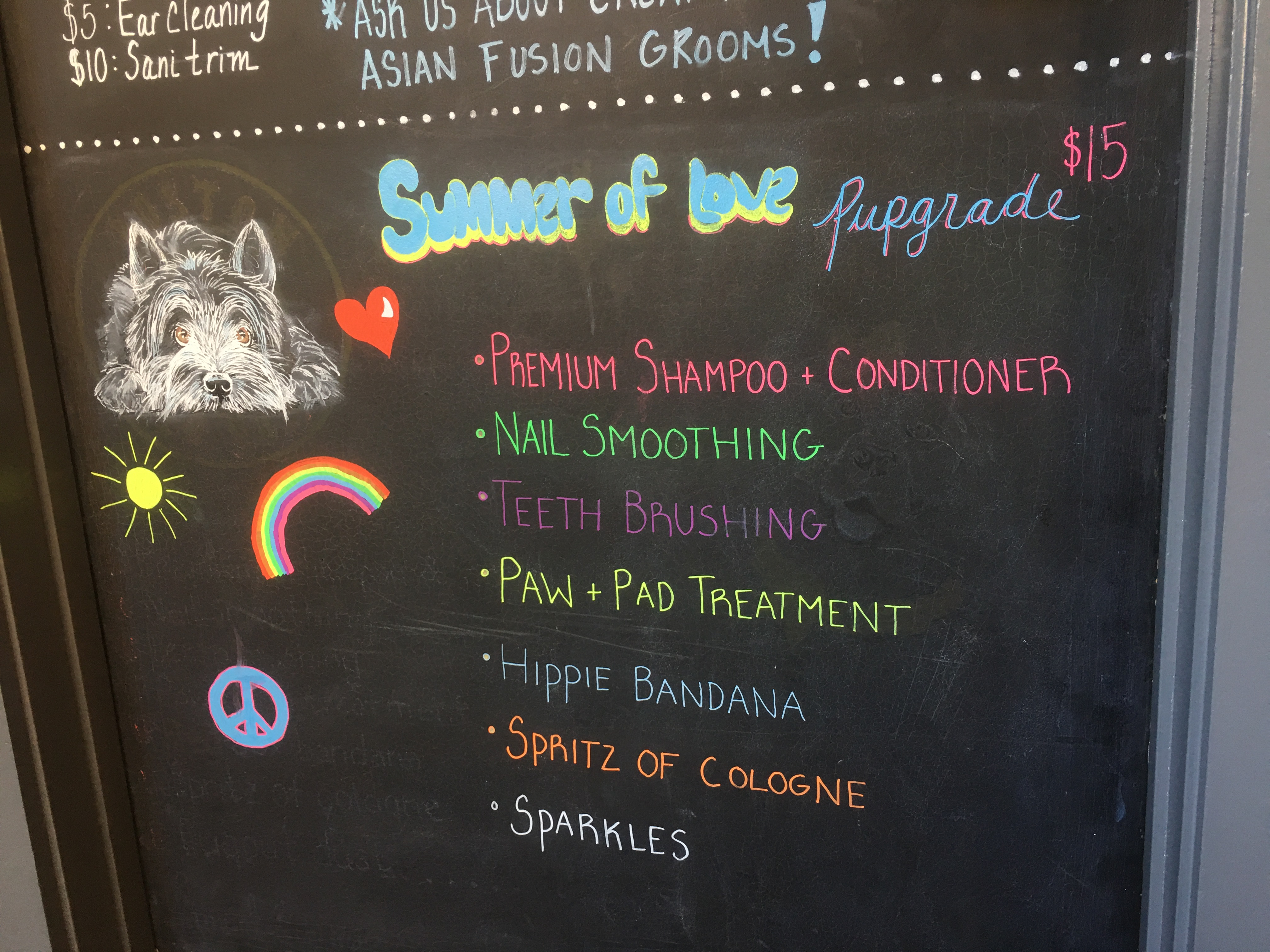 boston dog grooming urban hound