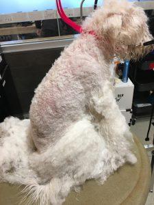 dog grooming boston urban hound