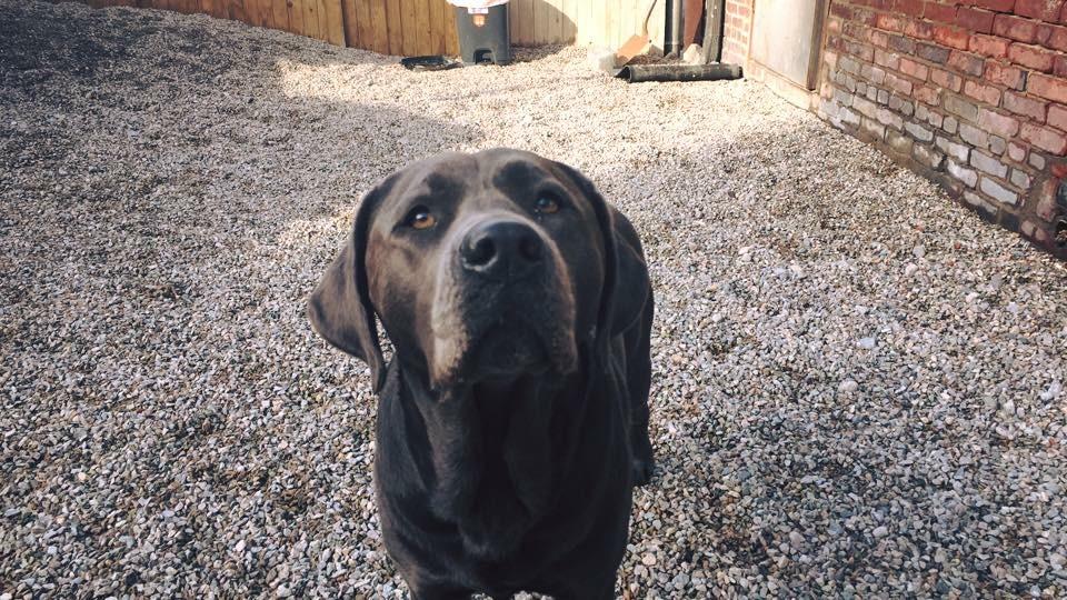 dog daycare boston urban hound training