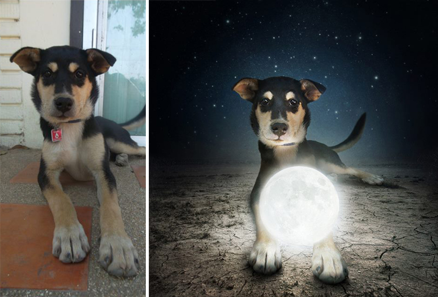 Sarolta Ban Dog Photography